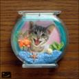 20100106|グッドアイデア!金魚鉢のフォトフレームマグネット